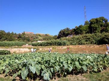 Capelania - Vale de Acór